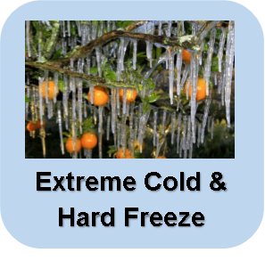 Extreme Cold and Hard Freeze