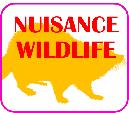 Nuisance Wildlife Page Click here