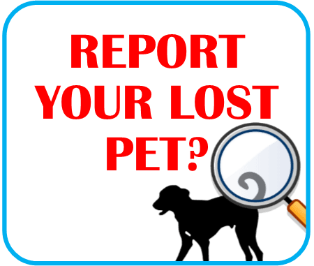 Report Lost Pet Click here