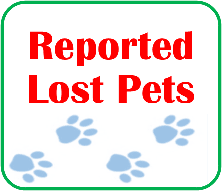 Reported Lost Pets Click Here