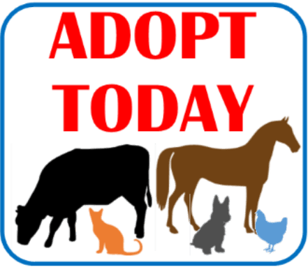Adopt Today by Clicking Here