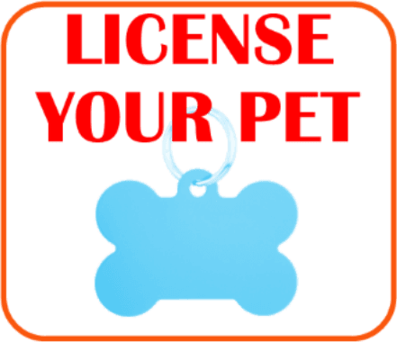 Pet Licensing Page Click here