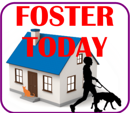 Apply to Foster Today